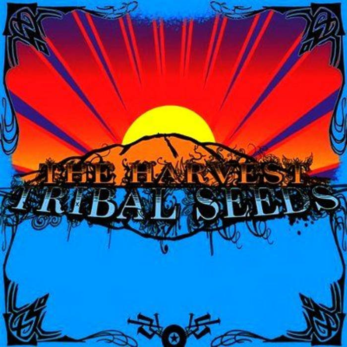 The Harvest | Tribal Seeds