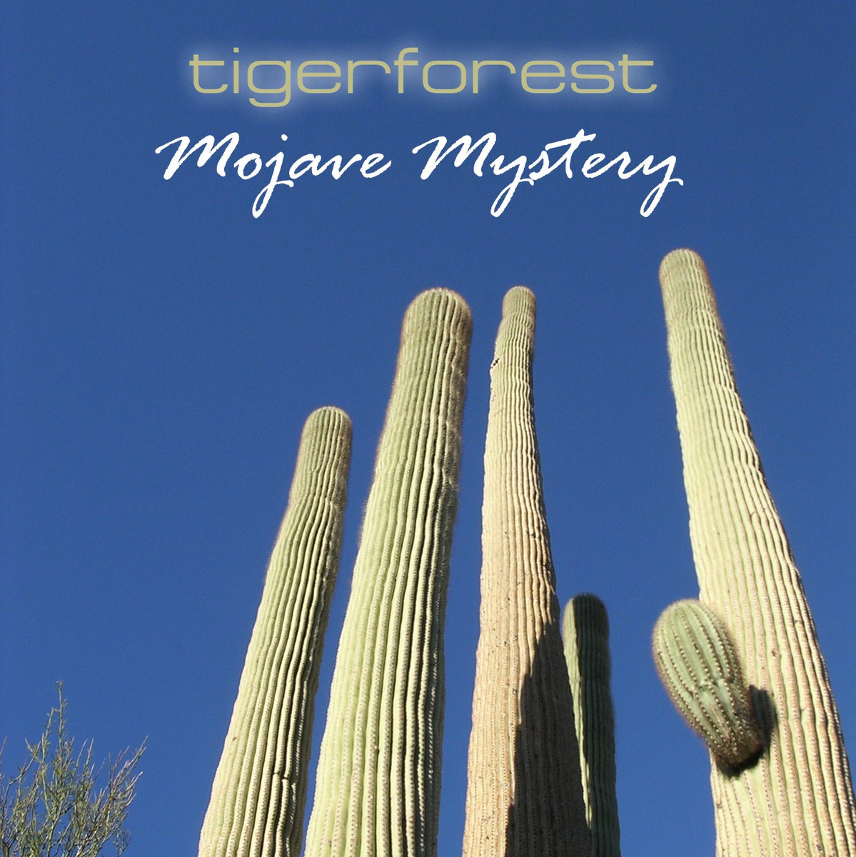 Mojave Mystery | Tigerforest