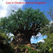 Live at Disney's Animal Kingdom 2016 cover art