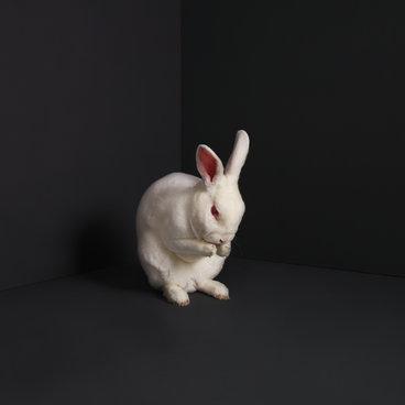 Rabbits main photo