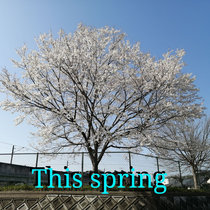 This spring cover art