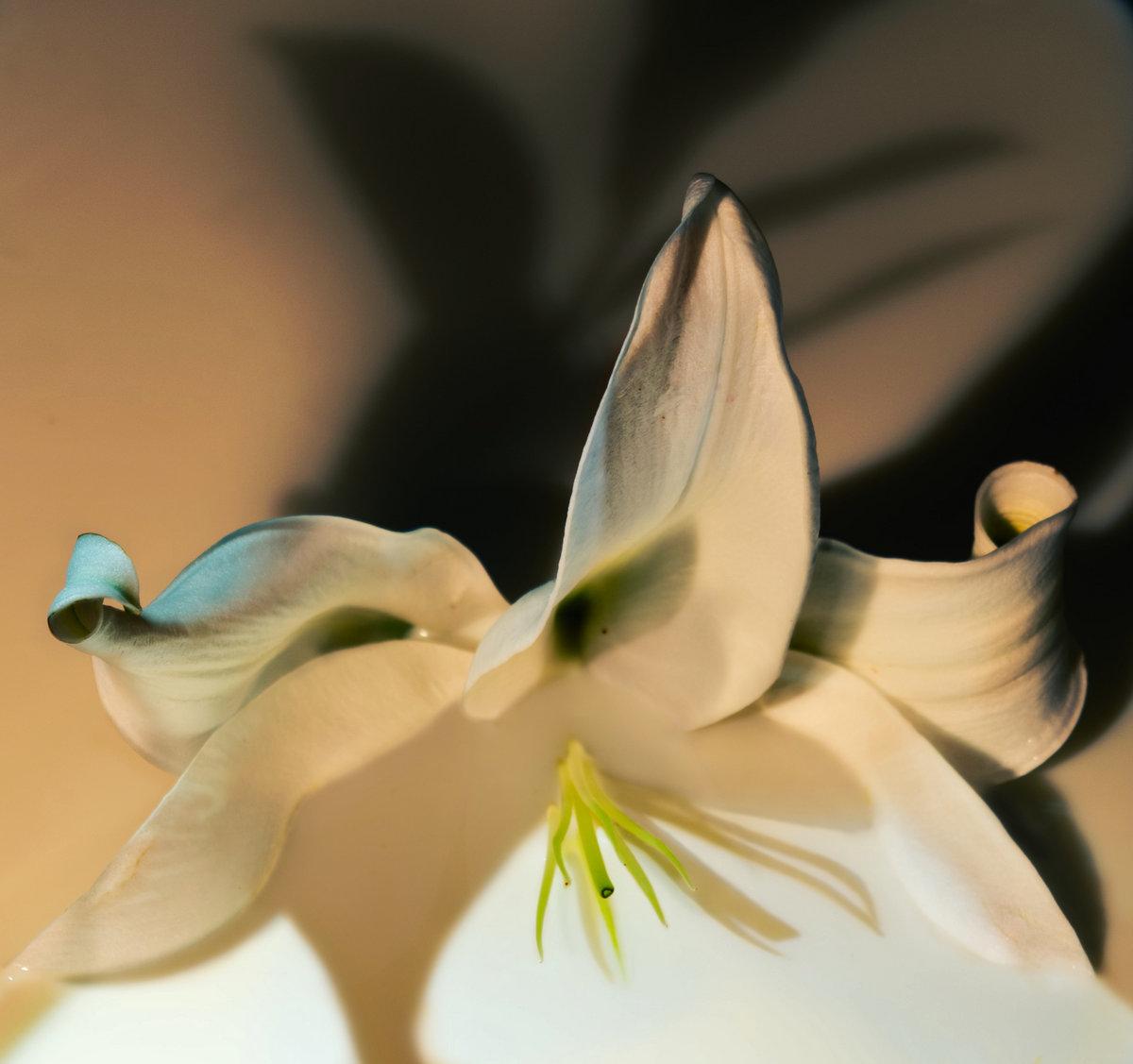 Cruel Spring | Needle Play