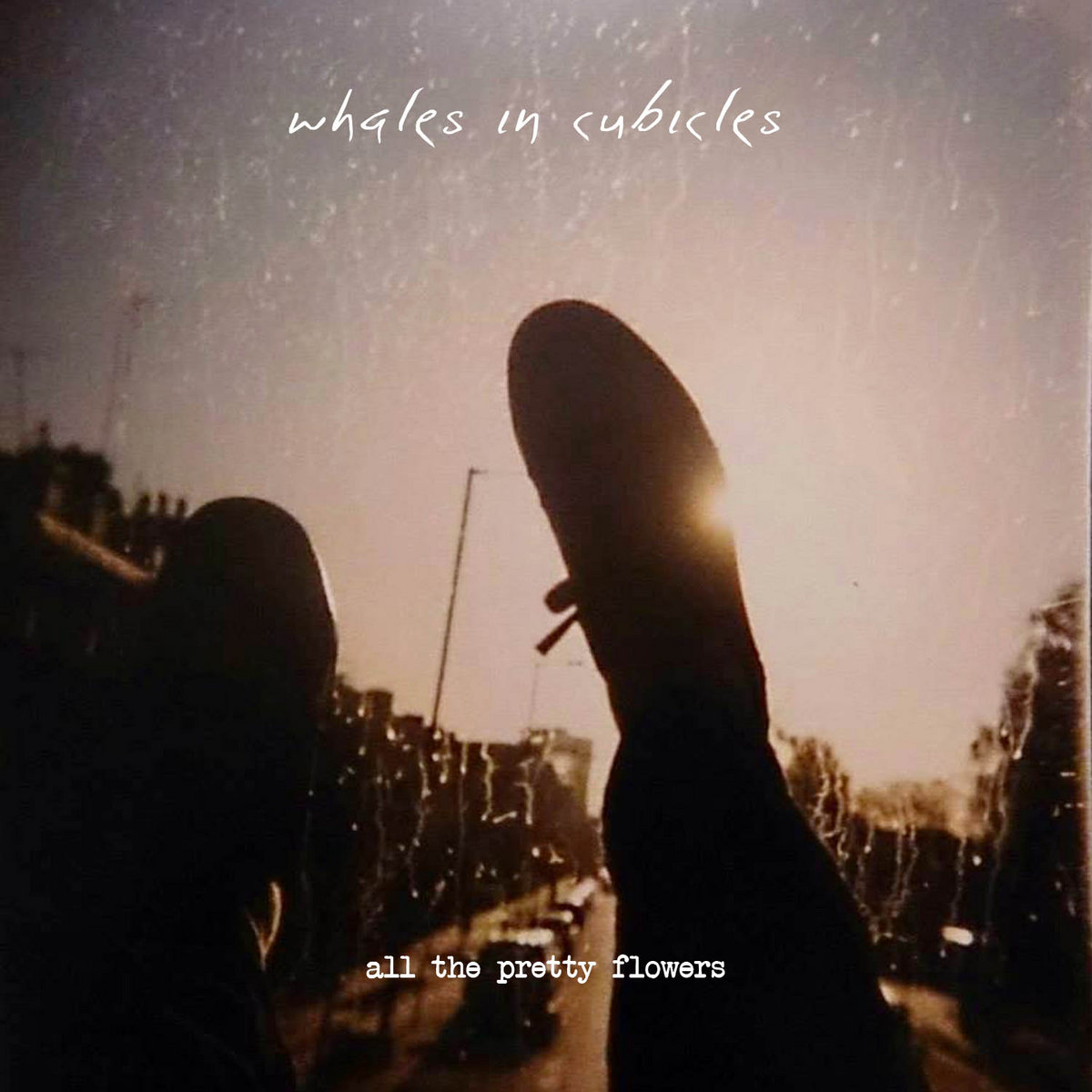 All The Pretty Flowers Acoustic Free Download Whales In Cubicles