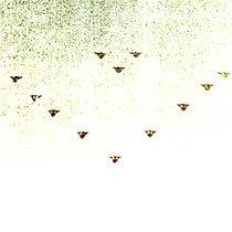 SUMMER NIGHT UFO  V cover art