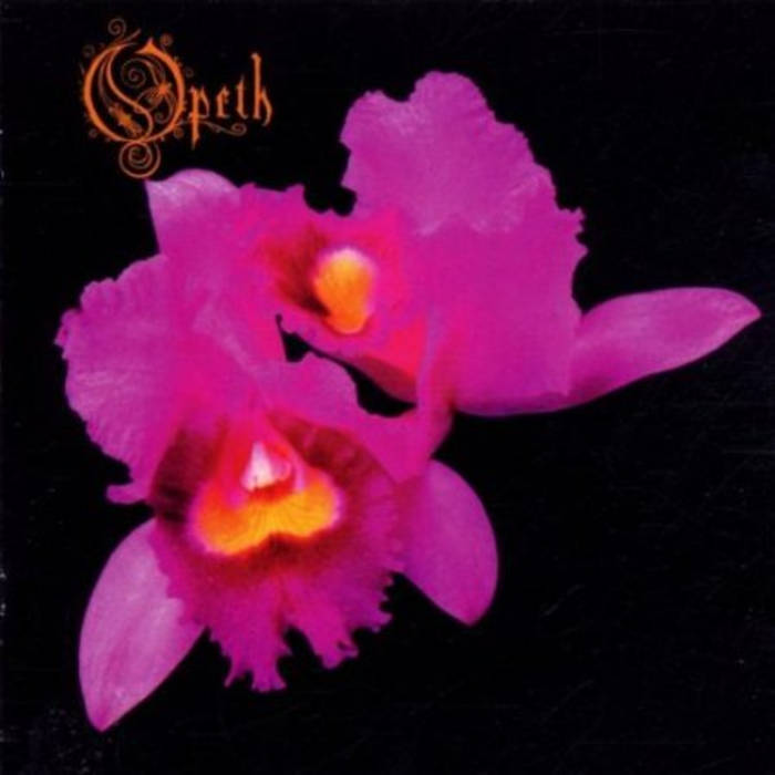 orchid  candlelight records uk, Beautiful flower
