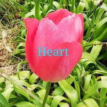 Heart cover art