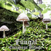 Fungal Cover Art