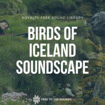 Birds Of Iceland - Seagulls, Puffins, Gannets, Guillemots, Razorbills, Snipes cover art