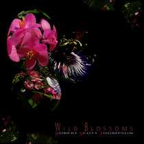 Wild Blossoms cover art