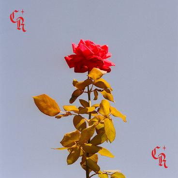 City Rose EP main photo