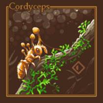Cordyceps cover art