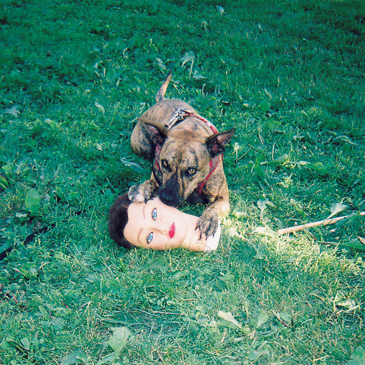 favorite albums of 2016, Cody by Joyce Manor