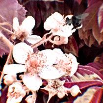 Killer Bees cover art