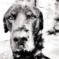 Ogden Morrow cover art