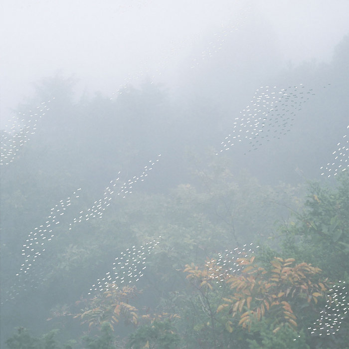 Mist, by Chihei Hatakeyama