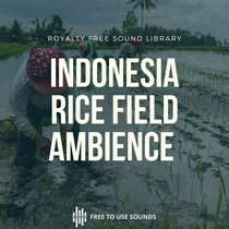 Rice Field Sounds Threshing Rice Sound Effects Indonesia Ambience cover art