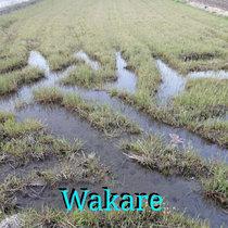 Wakare cover art