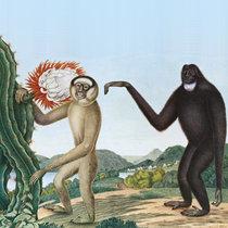 Primates cover art