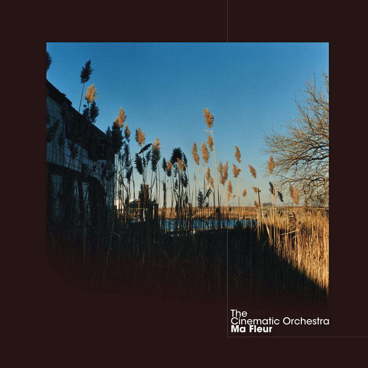Image result for the cinematic orchestra ma fleur""