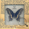 Butterflies and Graves Cover Art