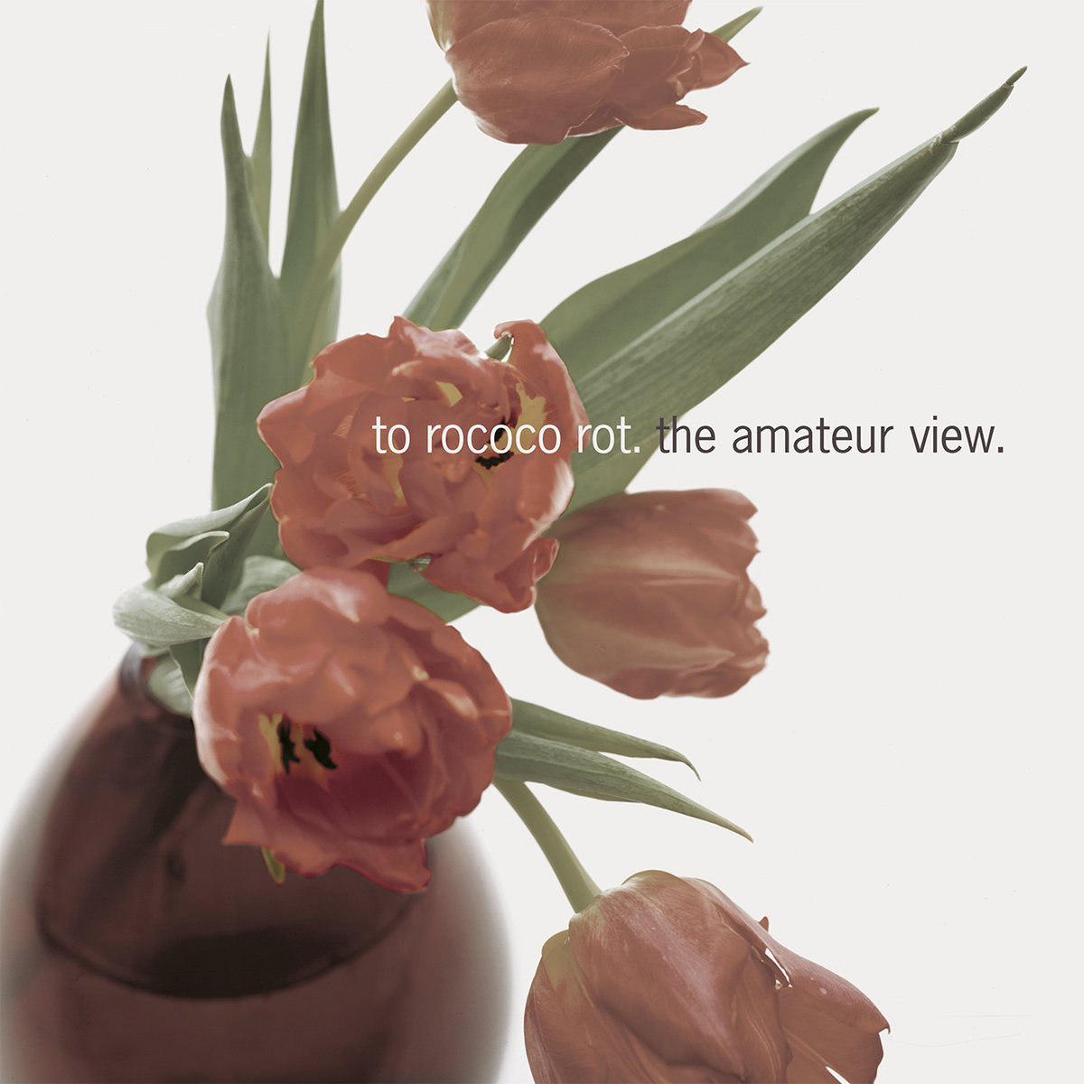 Amateur Photos the amateur view | to rococo rot