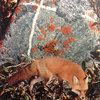 misc. magic vol. III :: lichen lane Cover Art