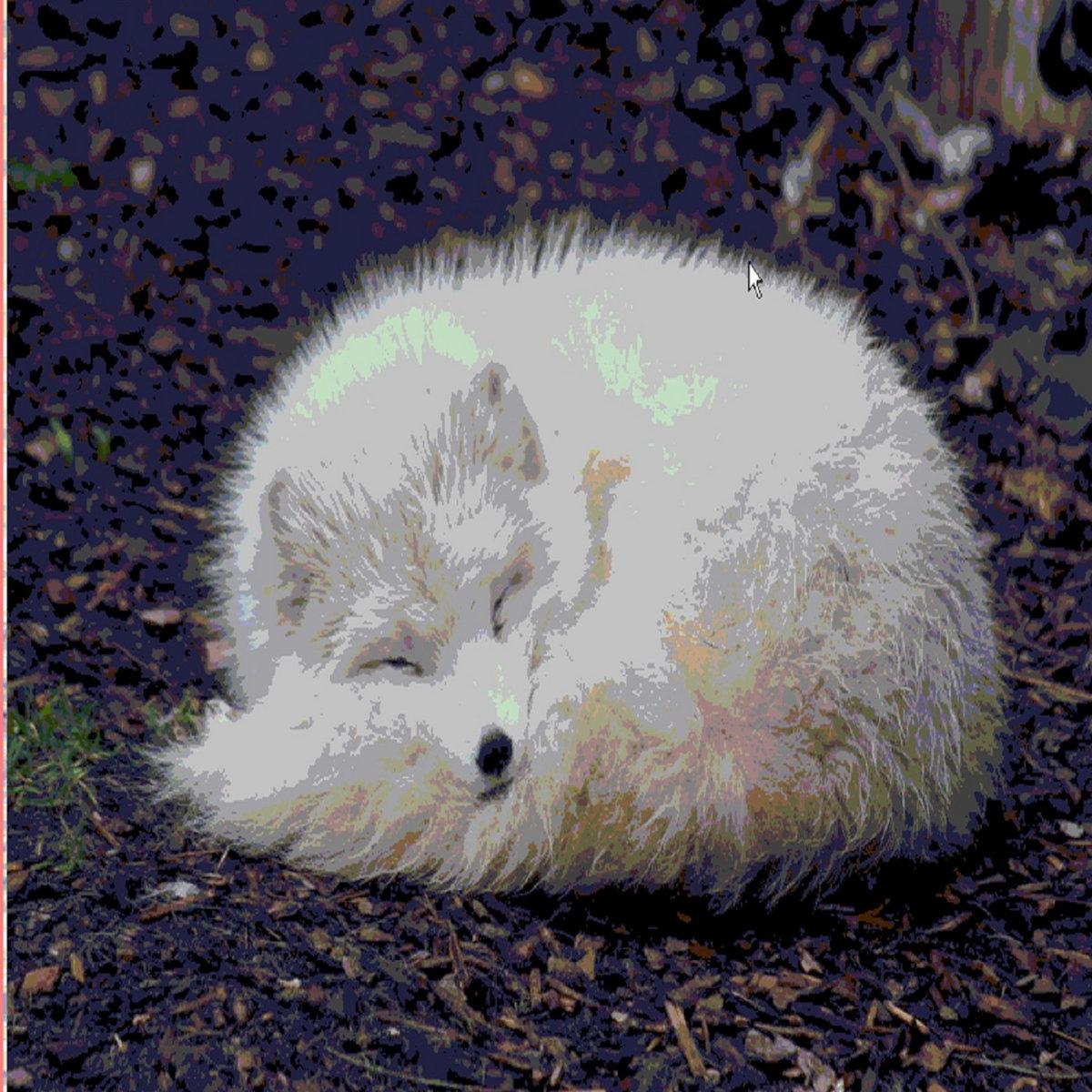 Artic Fox cover