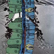 Like Lichen cover art