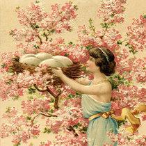 Cherry Tree / Shimmer, Part 2 cover art