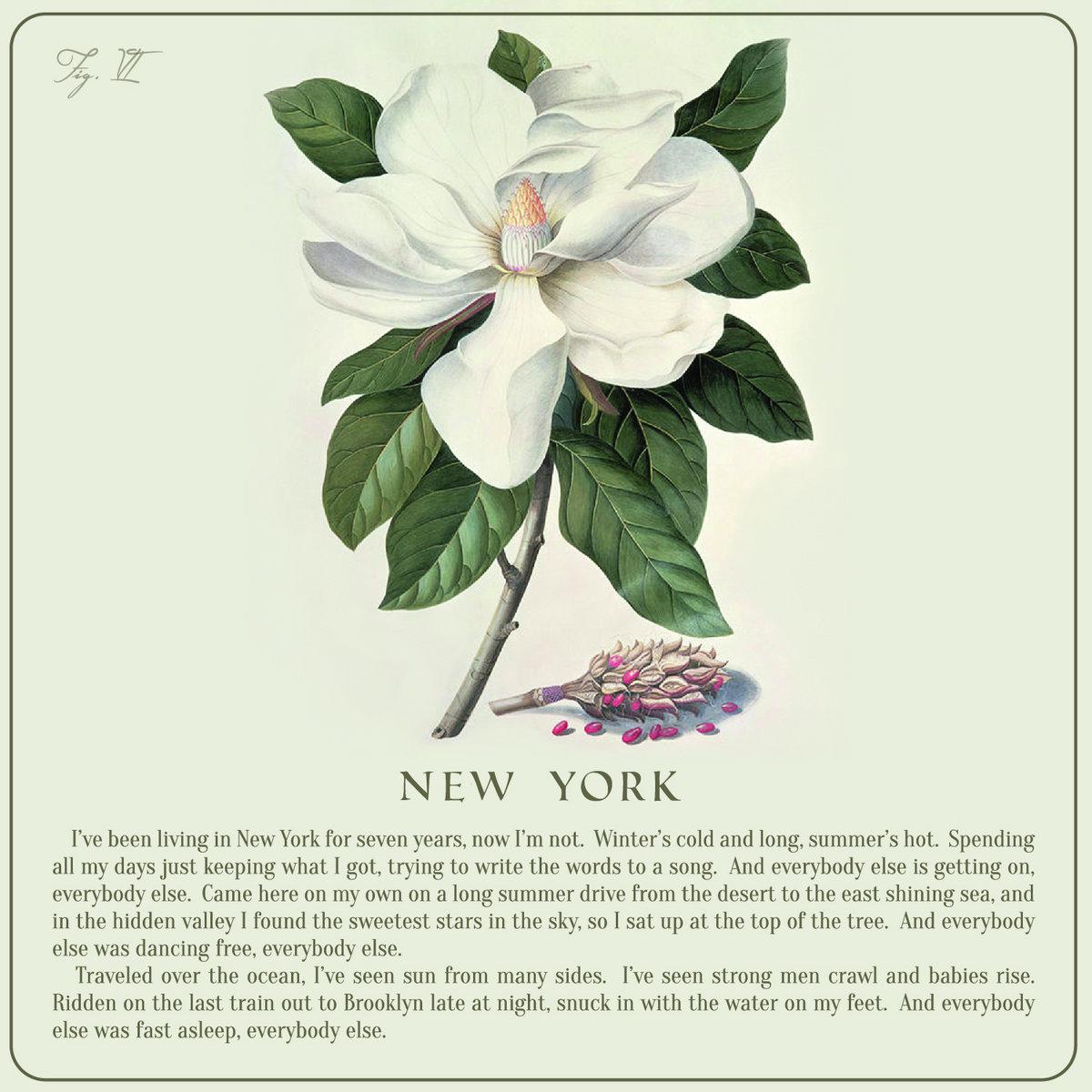 New York Amber Rubarth