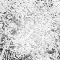 Над деревьями вы видите все cover art