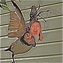 The Reserve Spider Army/Kim Gordon's Mind cover art