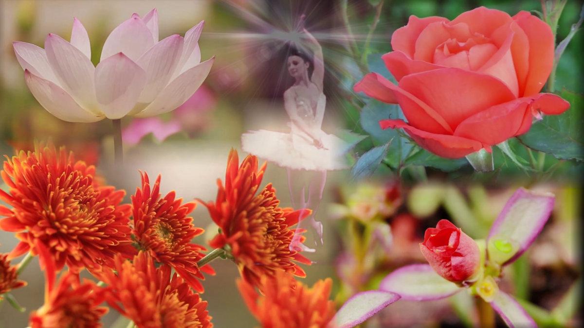 Spring Flowers Soul Dance Instrumental Music Light Heart