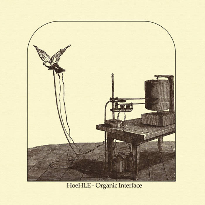 Hoehle - Organic Interface