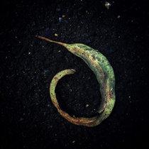 Evighetsblomma cover art