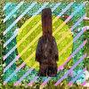 Morus Alba Cover Art