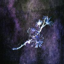 Michiru Aoyama「Winter light」 cover art