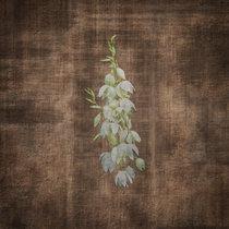 Terra Incognita: Live from the Ojito Wilderness cover art