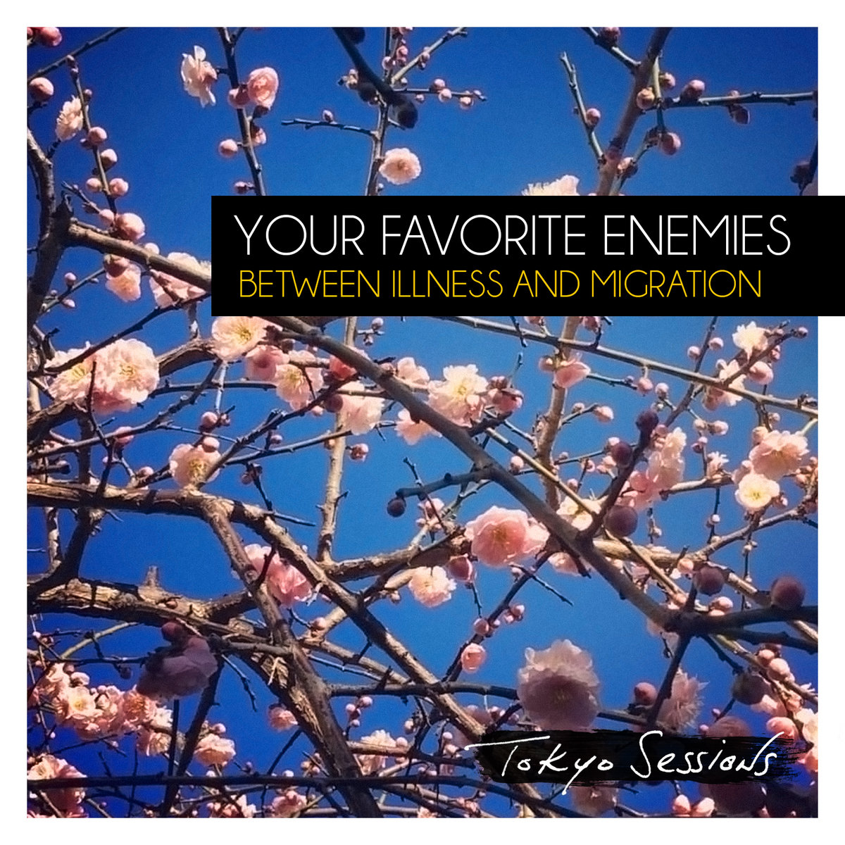 Underneath a Blooming Skylight | Your Favorite Enemies