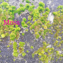 Moss cover art