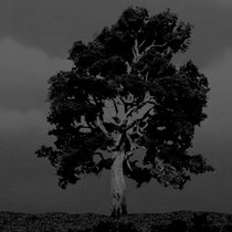 Sycamore Tree XMFX 4 Bonus cover art