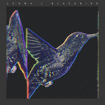 Lcoma - Blackbird cover art