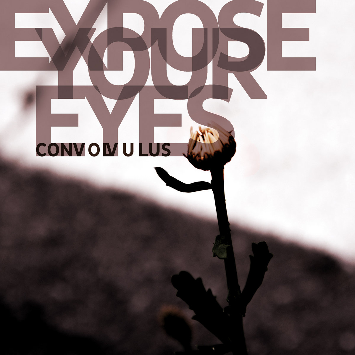 EXPOSE YOUR EYES – CONVOLVULUS