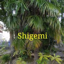 Shigemi cover art