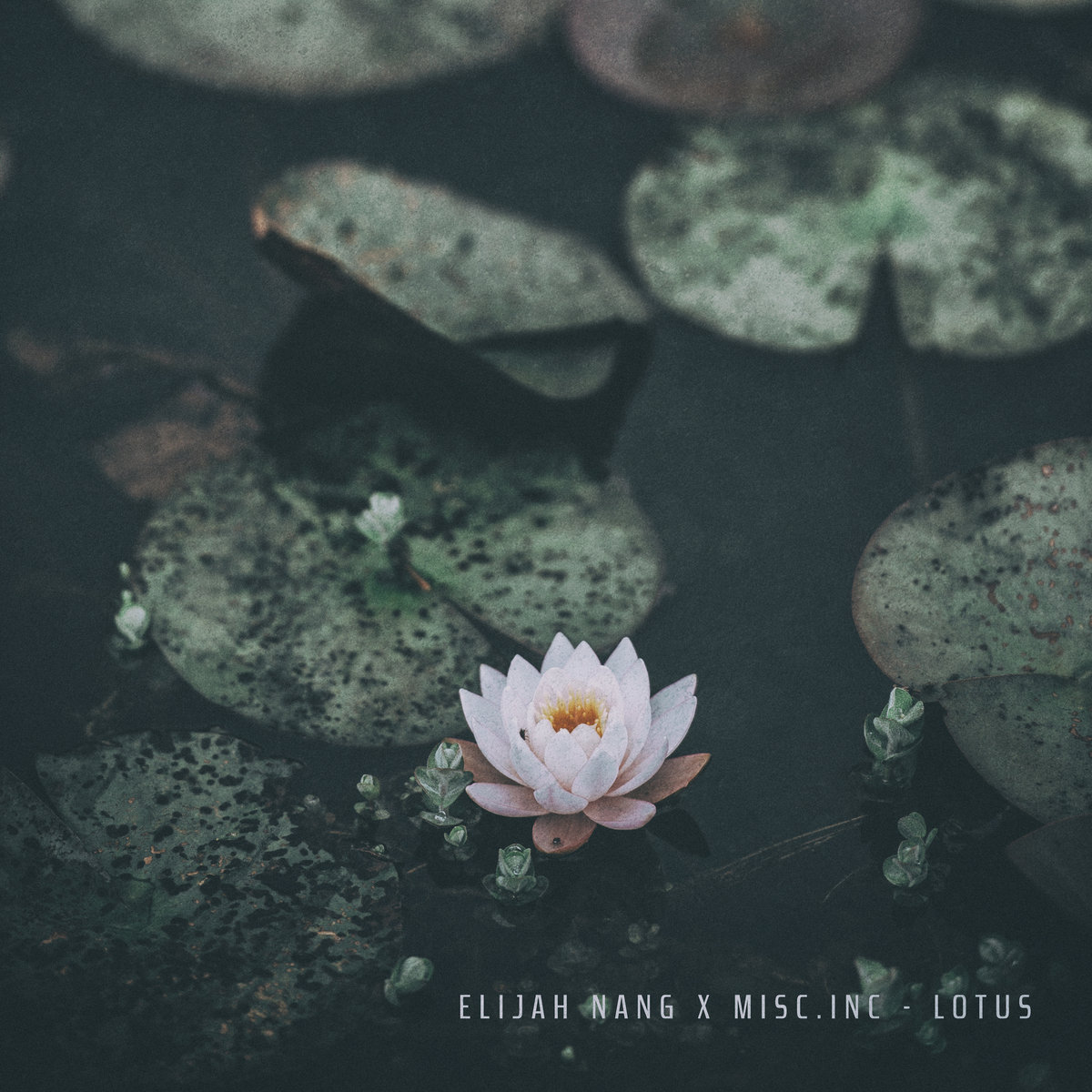 Lotus Miscc