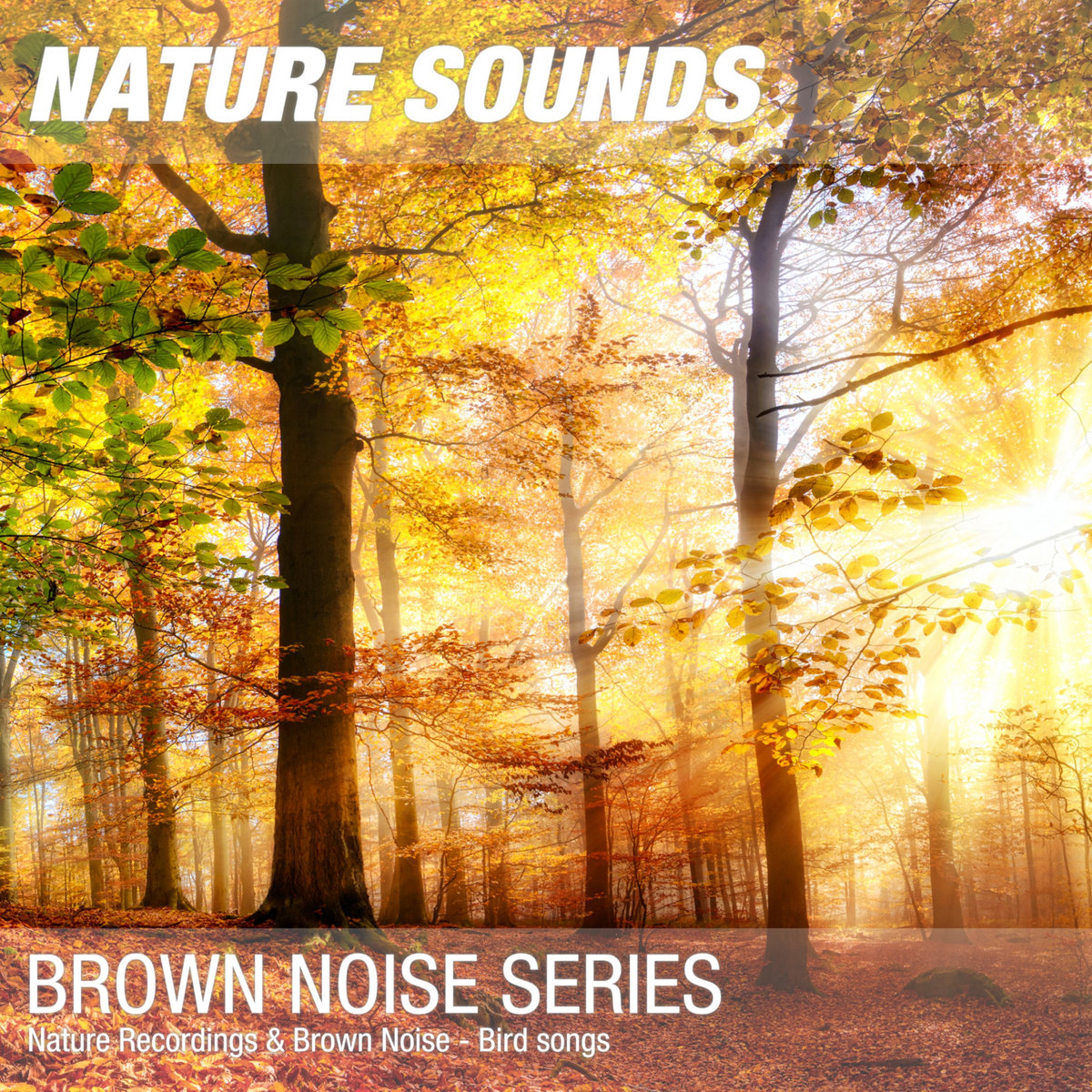 Nature Sounds for Sleep & Relaxation (Forest, birds, brown noise) 04
