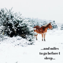 Miles To Go (Robert Frost Adaptation) cover art