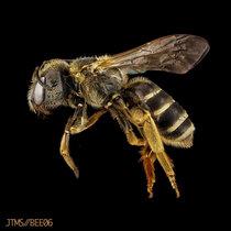 The Beekeeper cover art