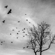 Birds, like black leaves cover art