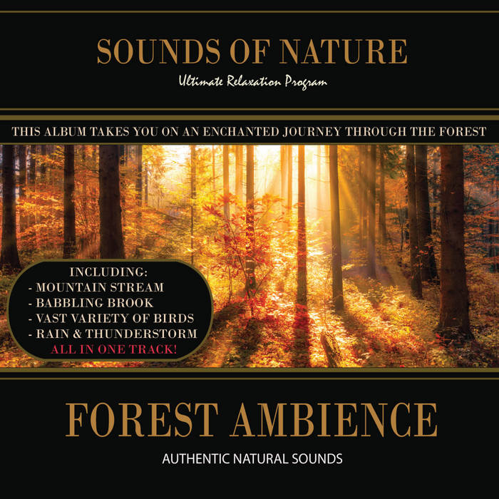 Forest Ambience (Nature Sounds) | Nature Sounds (Relaxing Sounds of